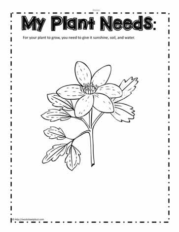 What Do Plants Need To Grow Worksheet - The Best and Most ...