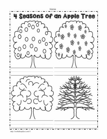 An Apple Tree in 4 Seasons Worksheets