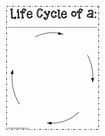 Life Cycle WorksheetWorksheets