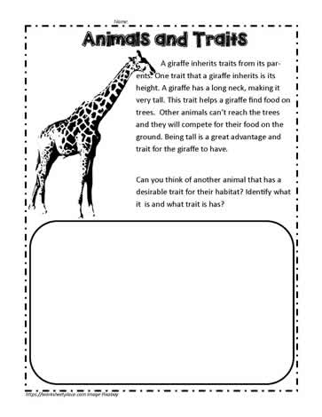 Animal Traits Activity