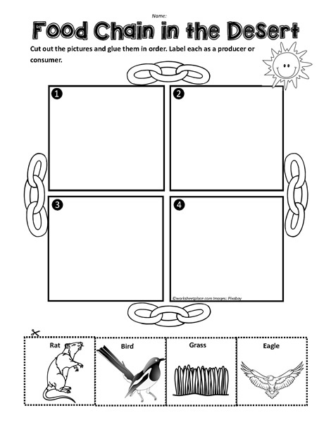 A Desert Food Chain Worksheets
