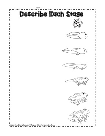 photograph relating to Frog Life Cycle Printable identified as Frog Lifetime Cycle Worksheets