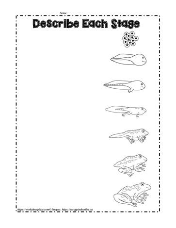 frog lifecycle | FROGS | Pinterest | Opettajat,Suklaaleivokset ja ...