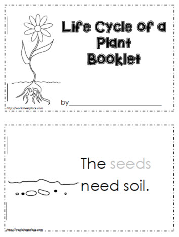 Life Cycle Of A Plant Worksheets
