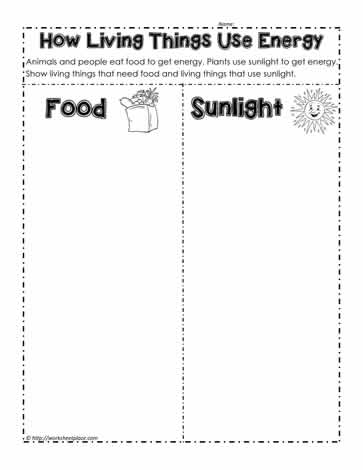 Living Things Use Energy Worksheets