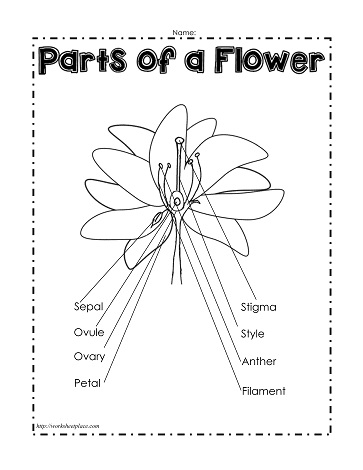 math worksheet : parts of a plant worksheetsworksheets : Flower Worksheets For Kindergarten