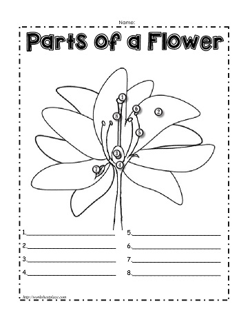 Parts of a Plant WorksheetsWorksheets