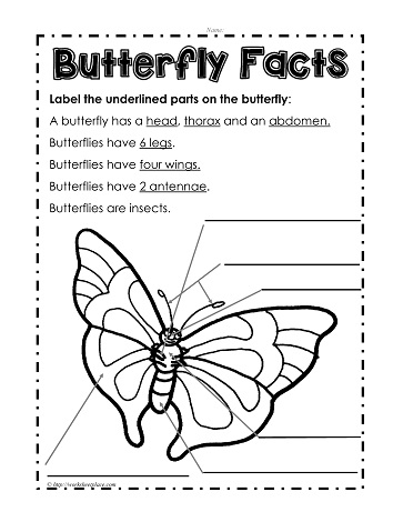 Index on Kindergarten Science Worksheets