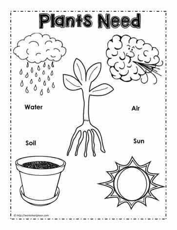 plants need poster worksheets. Black Bedroom Furniture Sets. Home Design Ideas