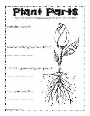 What are the Plant Parts Worksheets