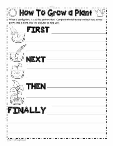 parts of a seed worksheet pdf