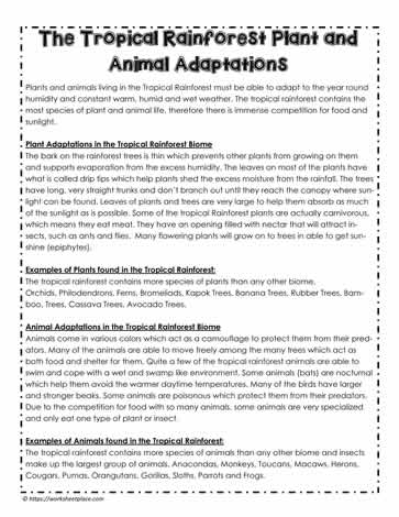 Rainforest Animal and Plant AdaptationsWorksheets