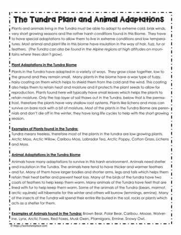 Tundra Plant and Animal AdaptationsWorksheets