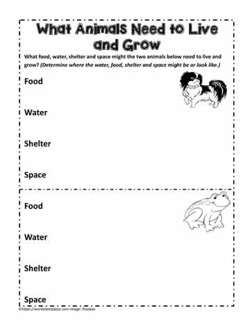 Animal Needs to Live and Grow Worksheets