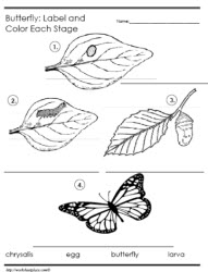 Butterfly Life Cycle - Label the Stages