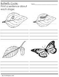 Butterfly life cycle worksheets 2nd grade