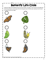 Butterfly Life Cycle 2