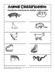 More Animal Classifications