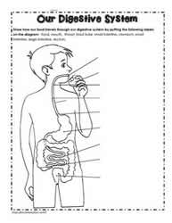 Human body worksheets digestive system printable ccuart Images