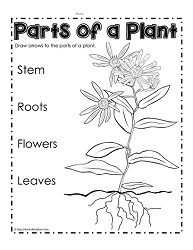 Parts of a plant worksheets label parts of a plant ccuart Images