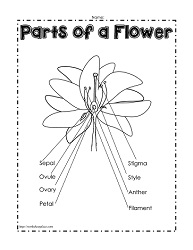 Parts of a plant worksheets parts of a flower labeled ccuart Choice Image