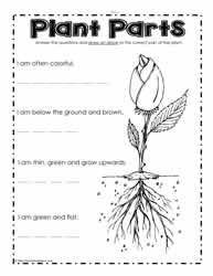 Worksheets Parts Of A Flower Worksheet parts of a plant worksheetsworksheets what are the parts