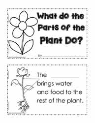 Plant Functions Worksheet