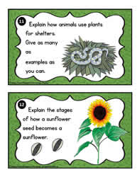 Plant Task Cards 11-12