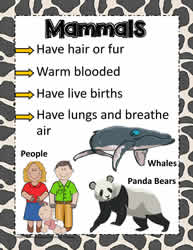Animal Poster for Mammals